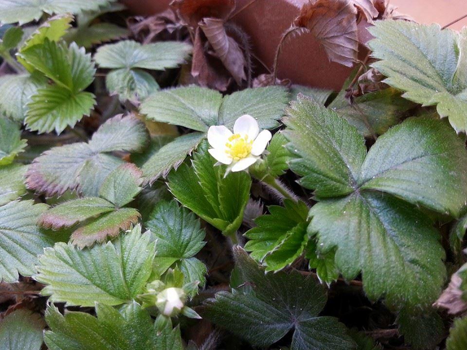 Primavera Plantar Frutas Verduras Medio Ambiente 2y3d Hierbas Aromaticas