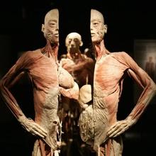 Human Bodies. La Exposición.