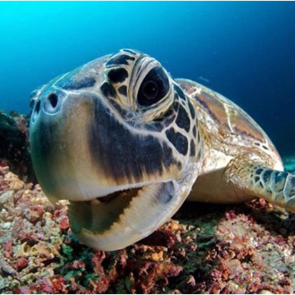 Yanpy Post 81 Sea Ocean Preservation