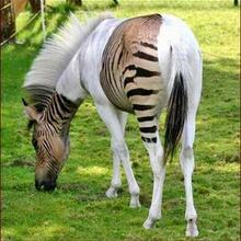 10 animales híbridos asombrosos