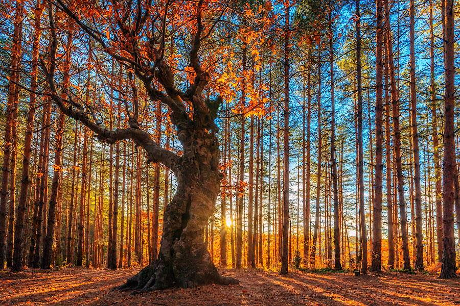 """""""The King Of the Forest"""" by Evgeni Dinev"""