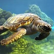 Tortugas terrestres y acuaticas