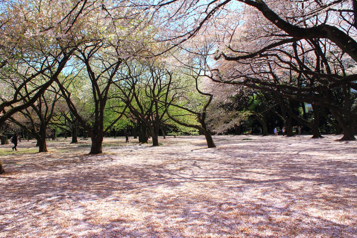 Jardín Nacional Shinjuku Gyoen