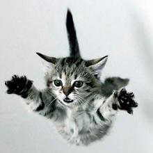 Las 7 vidas de los gatos