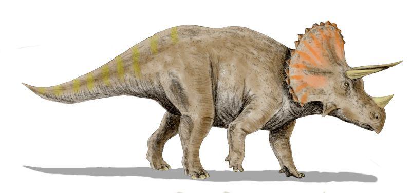 4. Triceratops