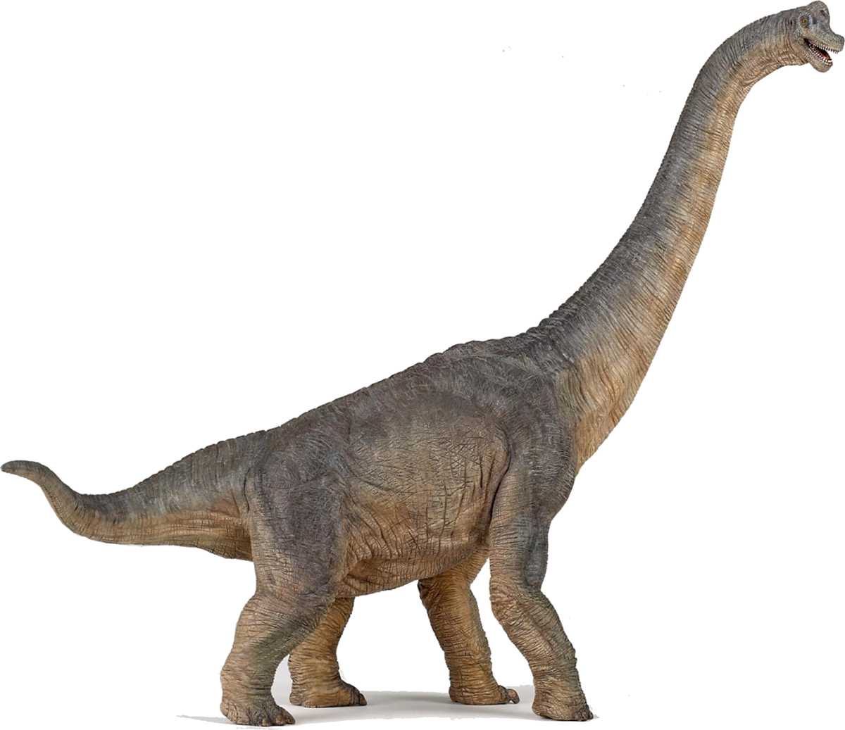 7. Braquiosaurio