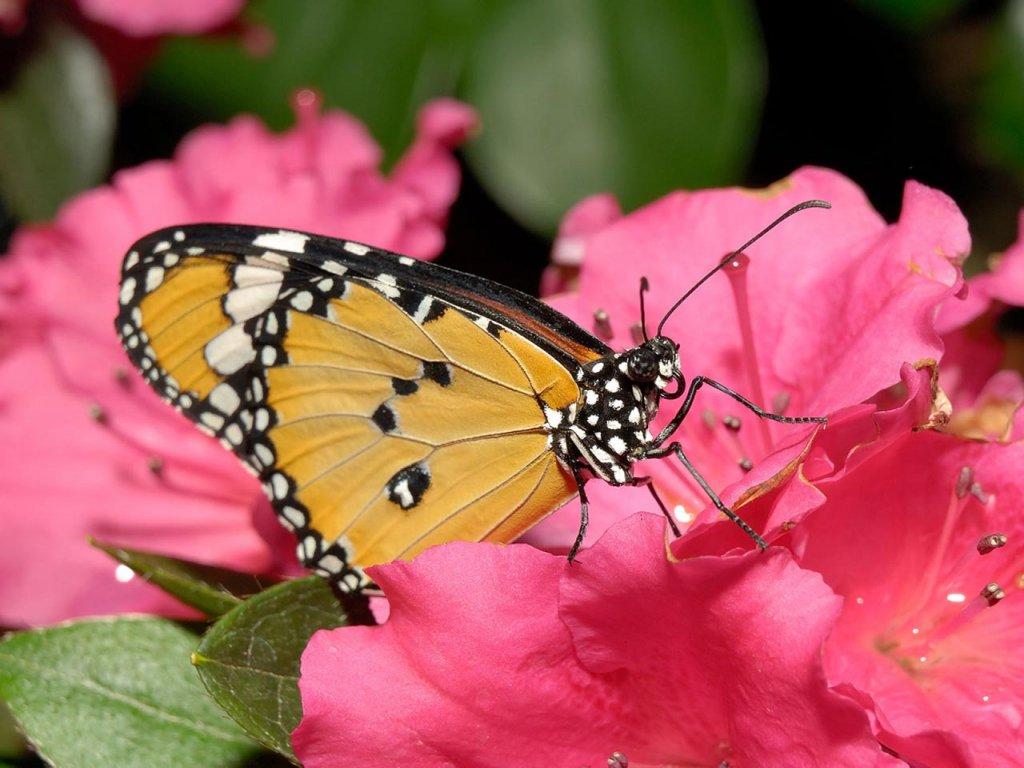 Fondos De Pantalla Mariposas Flores
