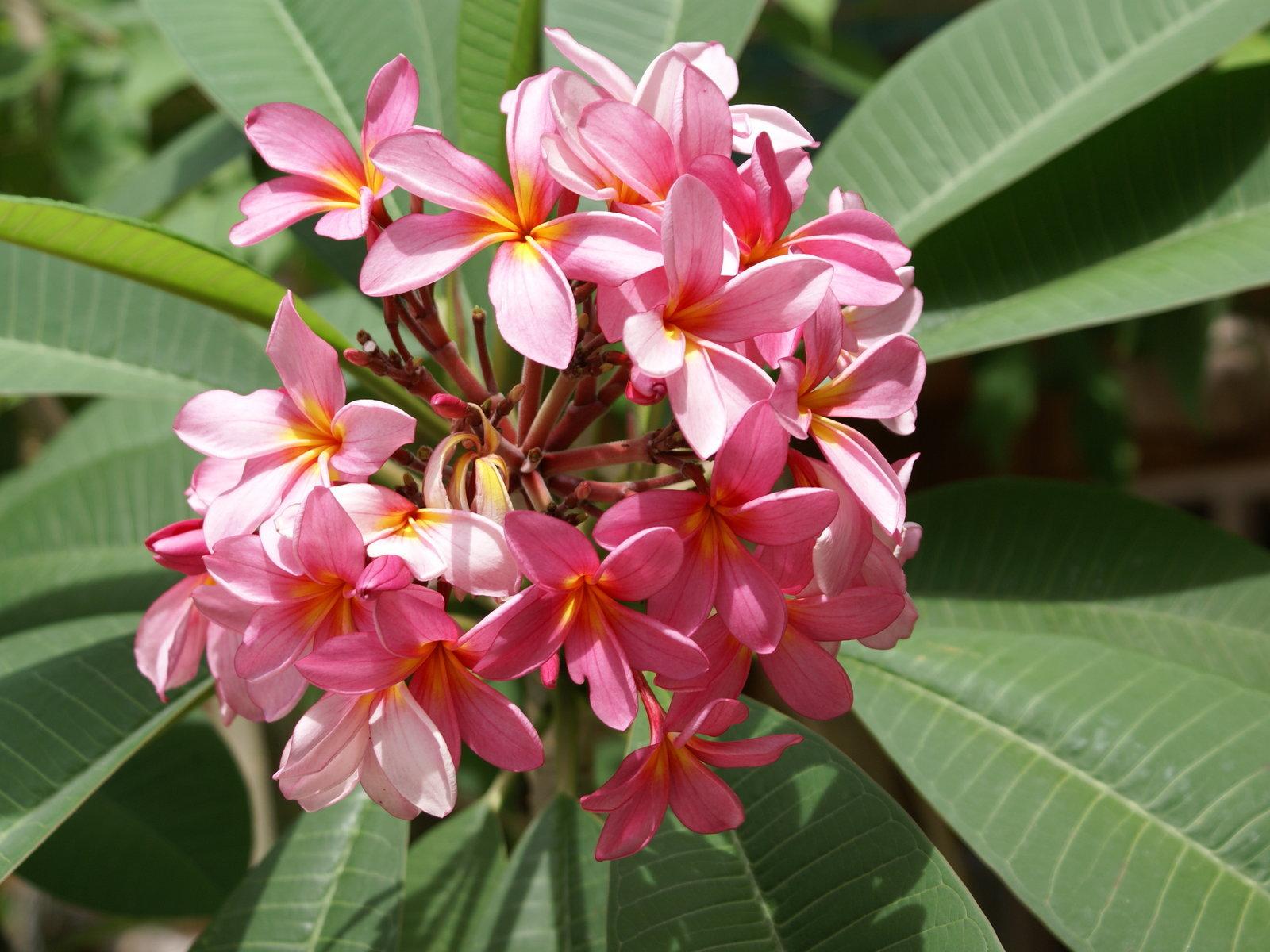 Exotique Flowers Dsc03383