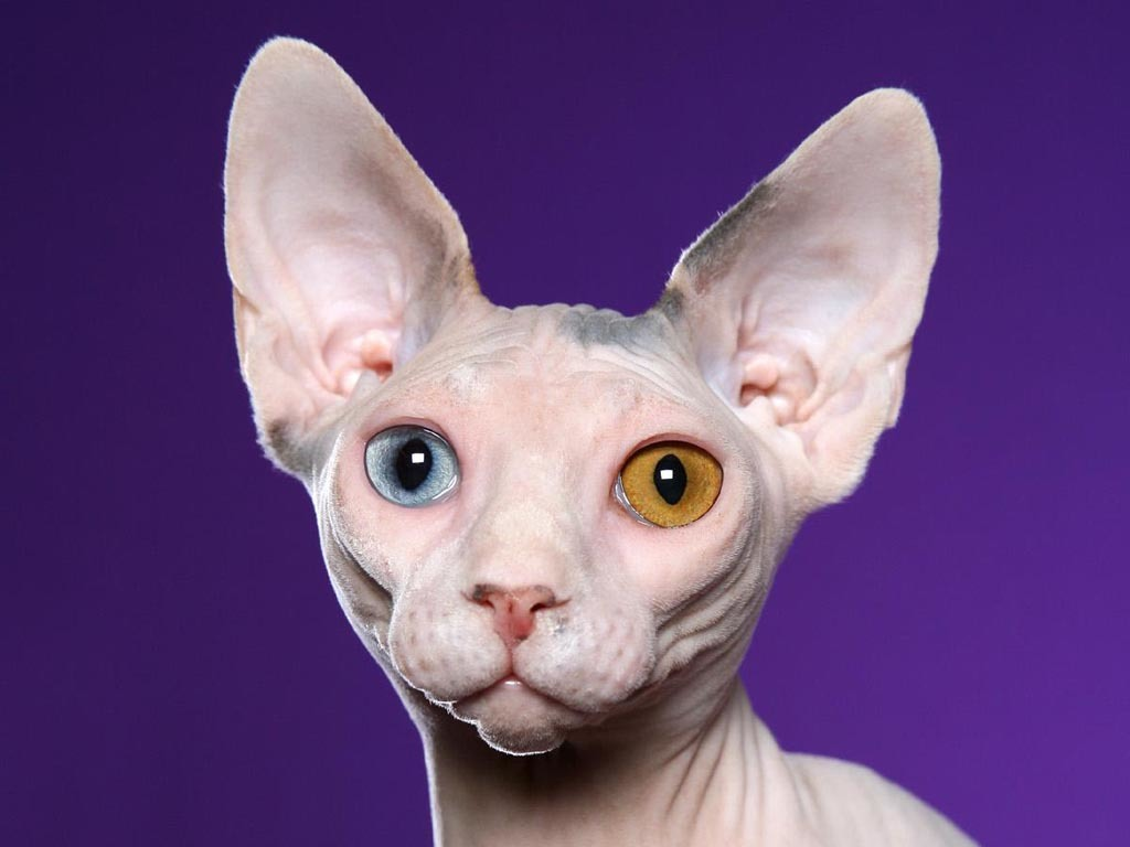 Cat01 Jpg