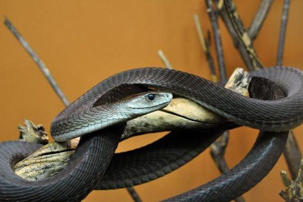 Las 10 Serpientes Mas Fascinantes Del Mundo9