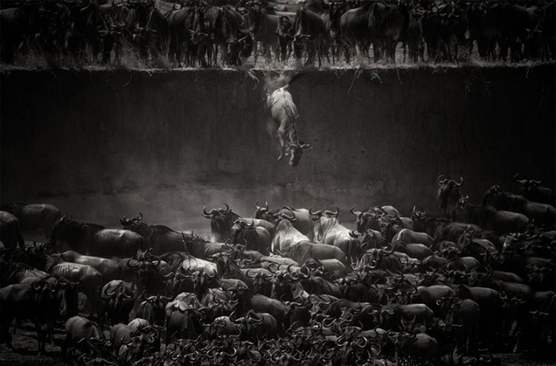 the Mara River in Northern Serengeti, Tanzania -