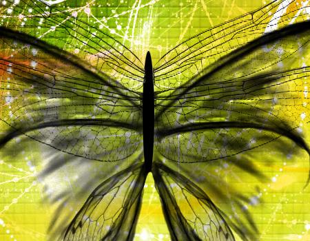 3 Lsd Butterfly