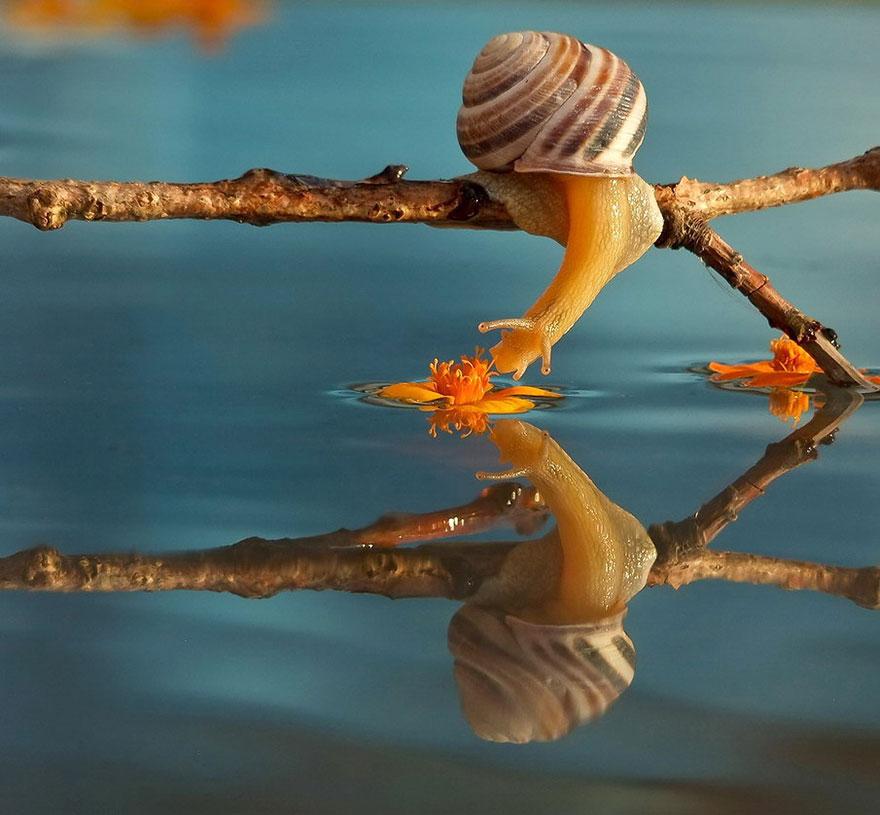 Un monde miniature d' Escargots. Click here!