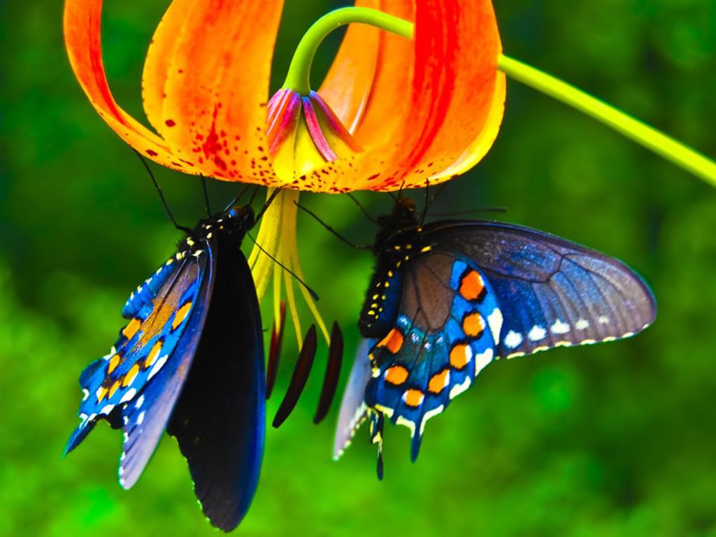 Flor Mariposas