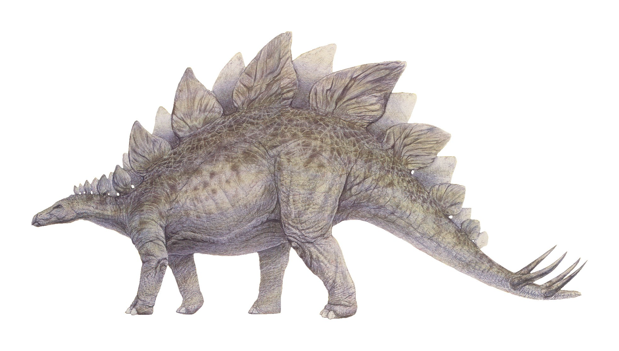 8. Estegosaurio