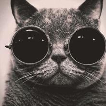 Los gatos más divertidos