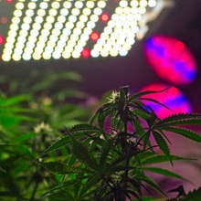 Best 600W LED Grow Lights| Treesindoor