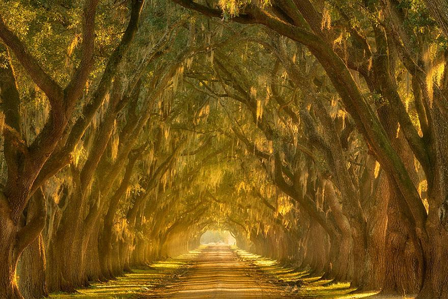 Amazing Tree Tunnels 18
