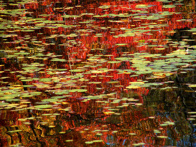 Monets Abstract Pond