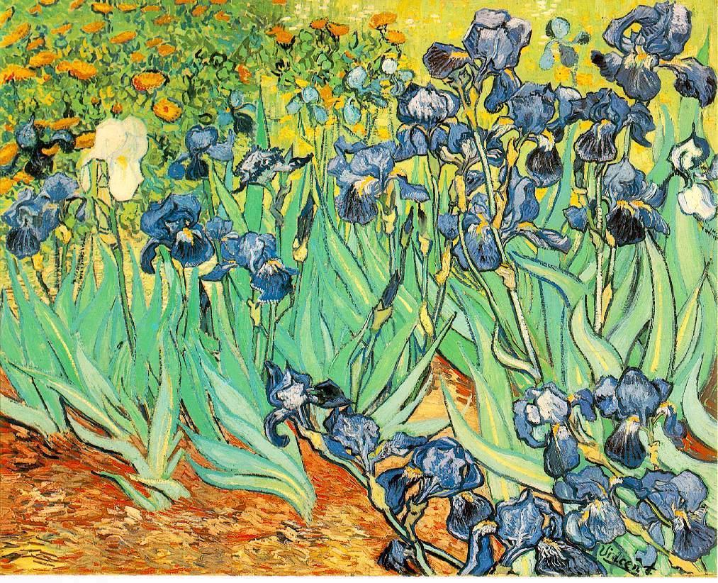 Gogh Irises
