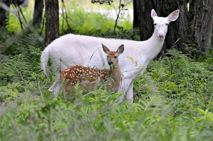 Albinisme et le leucisme.Click Here!