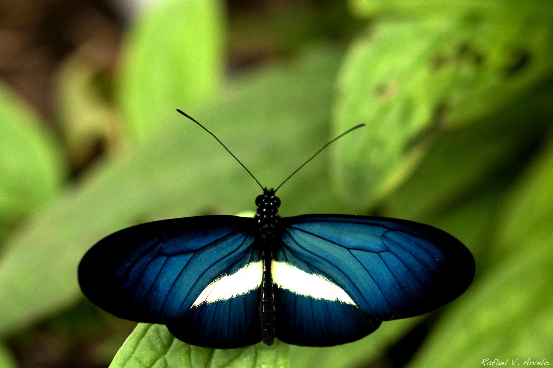 Mariposas 5