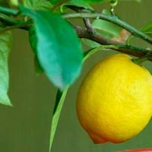 10 árboles frutales para plantar