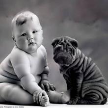 Mascotas vs. dueños
