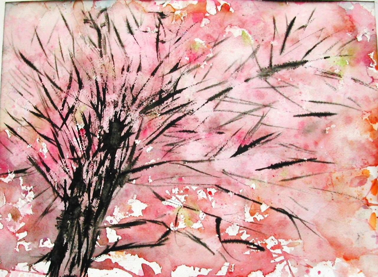 Printemps Est Arrive Cerisiers Japon Prunus S L 1