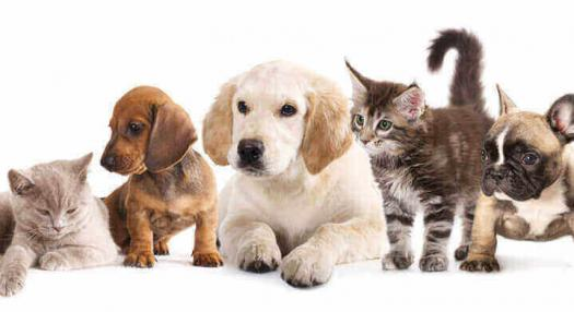 Traveling With Pets Travel Information Air Tahiti Nui