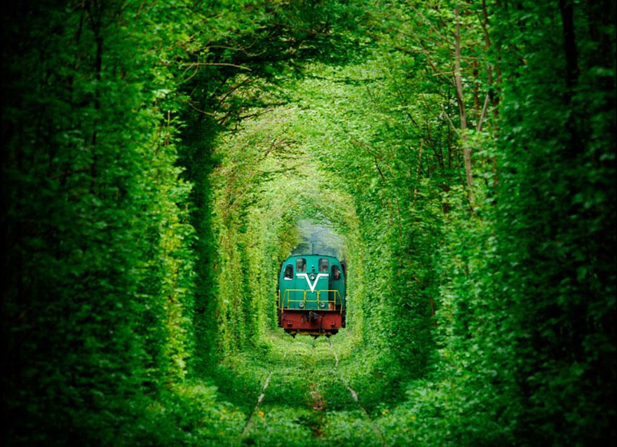 Amazing Tree Tunnels 2 2