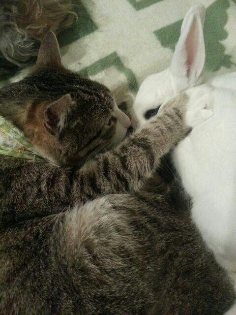 Nano dando mimos a su hermana Tiffany Amor entre gato coneja