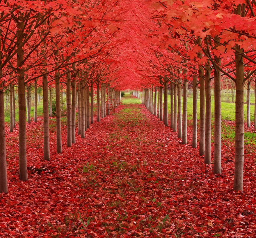 Amazing Tree Tunnels 13