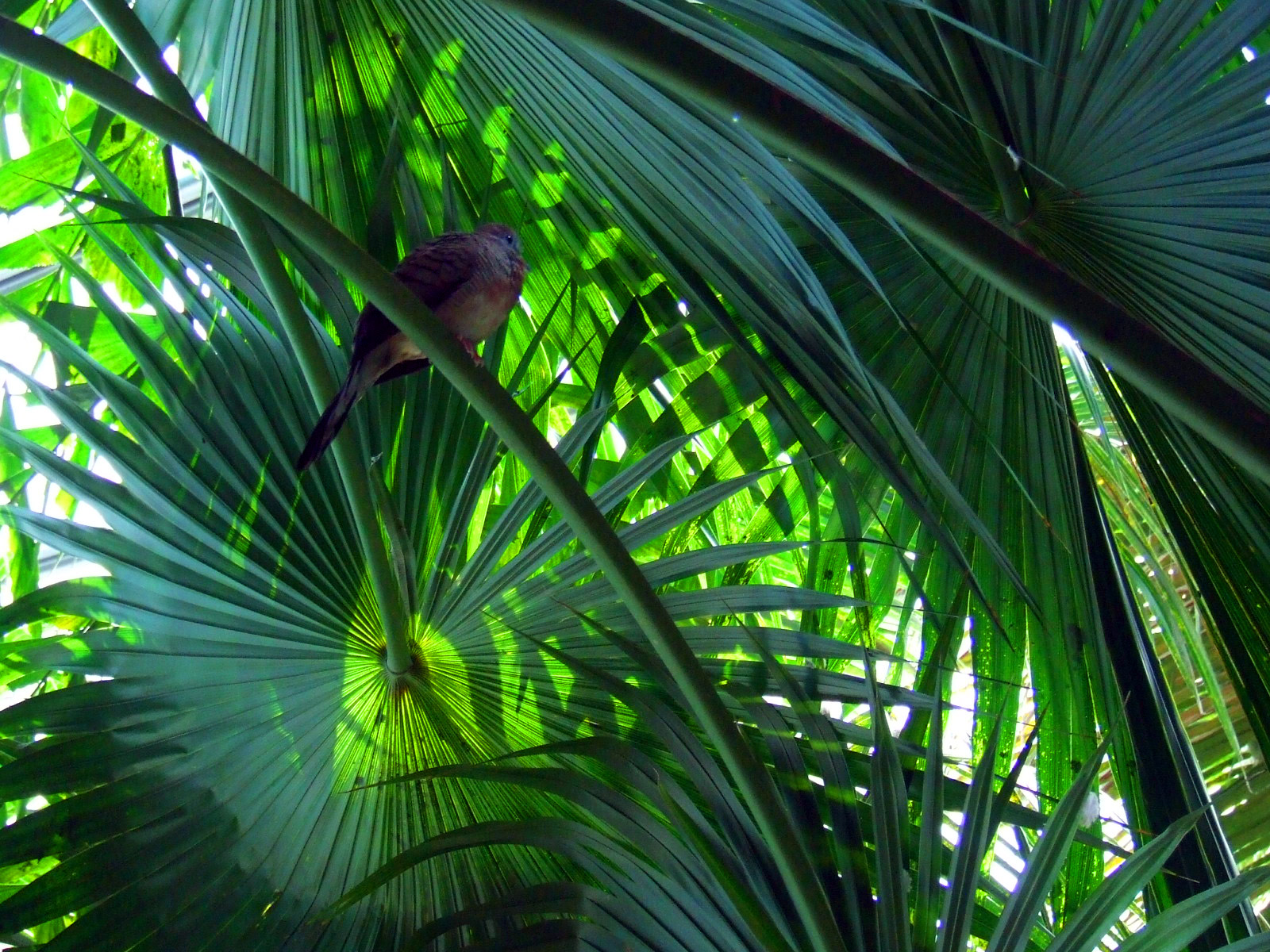 Exotic Plant Leaves In Jungle1605
