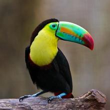 Costa Rica Pura Vida