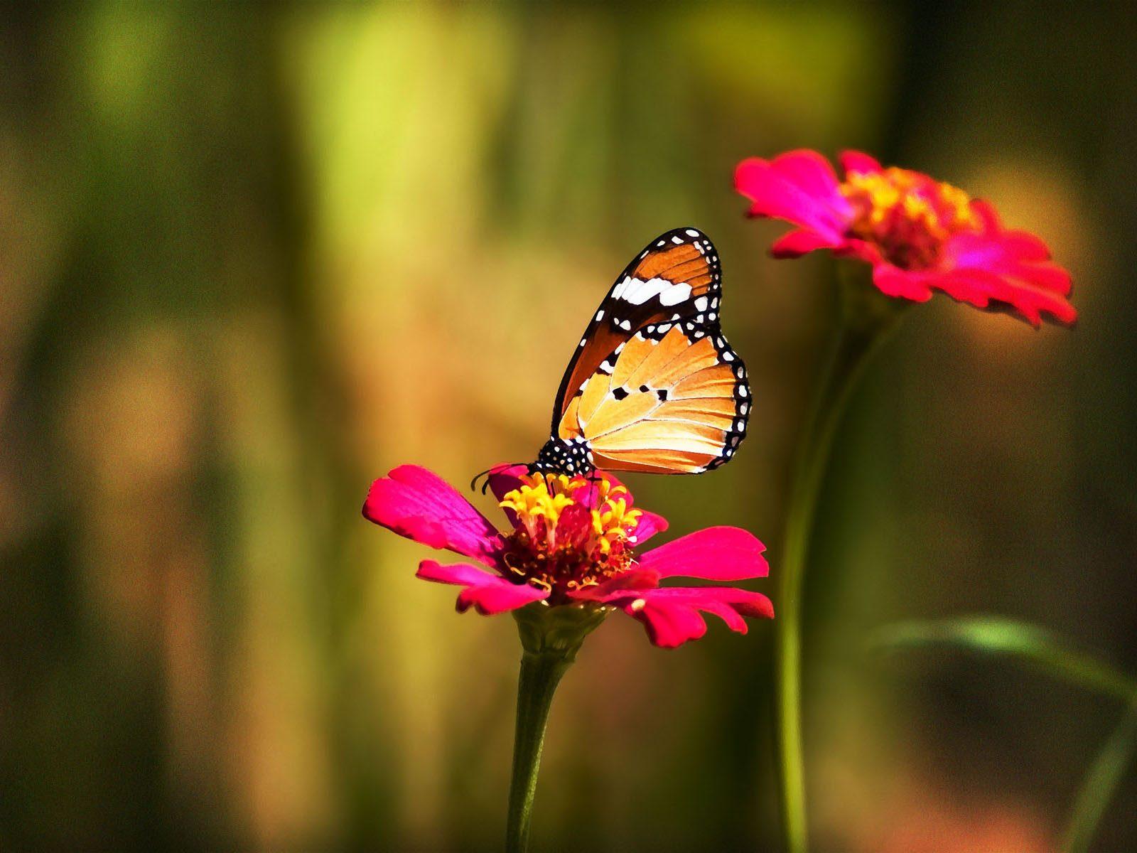 Fondo Mariposas En Las Flores
