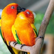 Imágenes de animales besandose