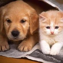 Mascotas, que haríamos sin ellas!!!