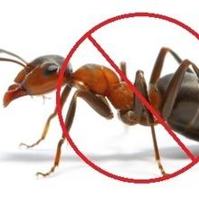Best Pest Control Hobart