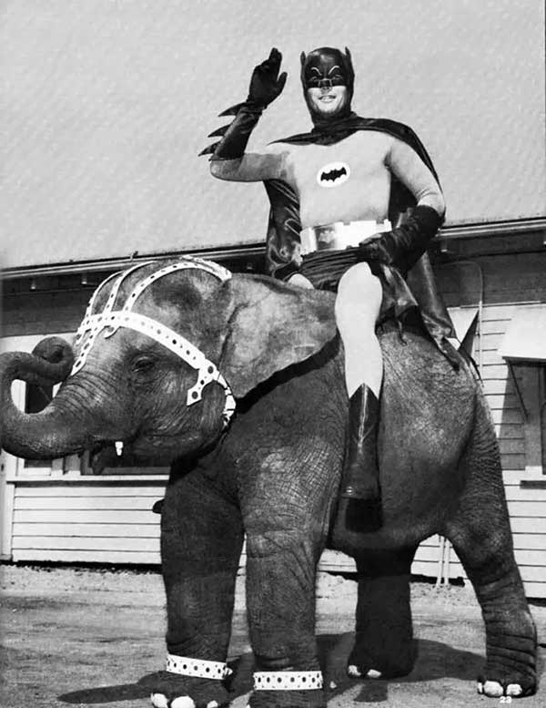 Adam West Posing On An Elephant On The Set Of The 1960 S Batman Tv Series