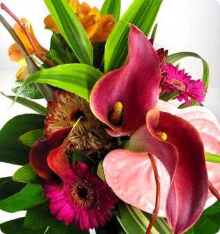 Fleurs Exotiques Pas Cher 1
