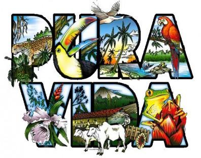 10431230 Pura Vida Costa Rica