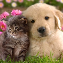 Las 20 fotos más dulces. Gatos y perros