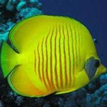 Arrecifes de Coral: Mar Rojo