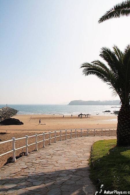 La Palmera Beach Palmtree