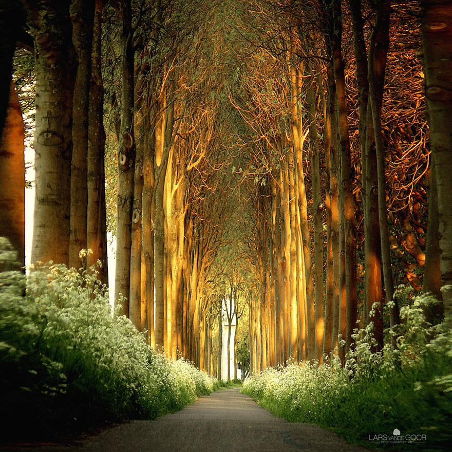 Amazing Tree Tunnels 7