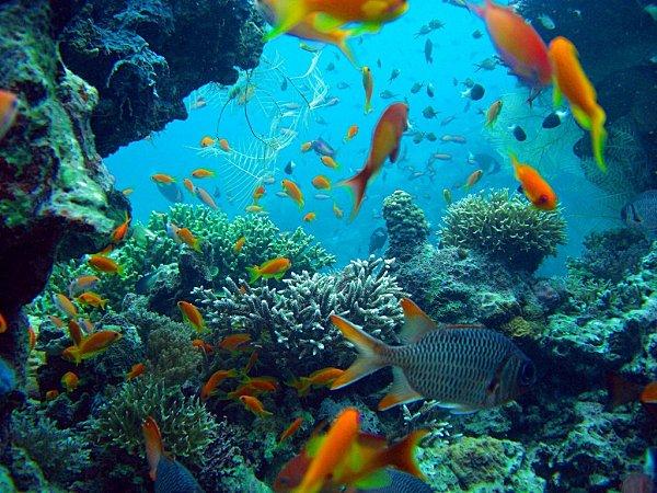 2009 04 01 R Cifs Coralliens 3