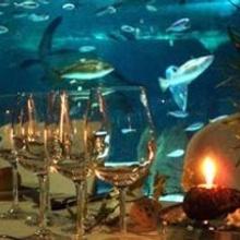 15 de Noviembre: Cenando con tiburones