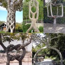 The  Circus Tree