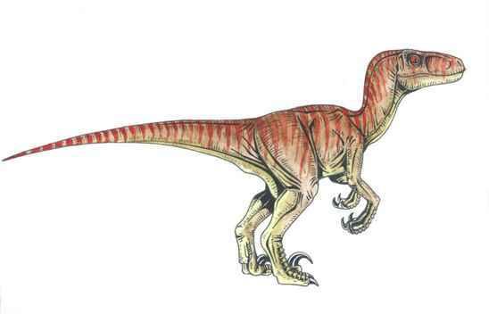 3. Velociraptor